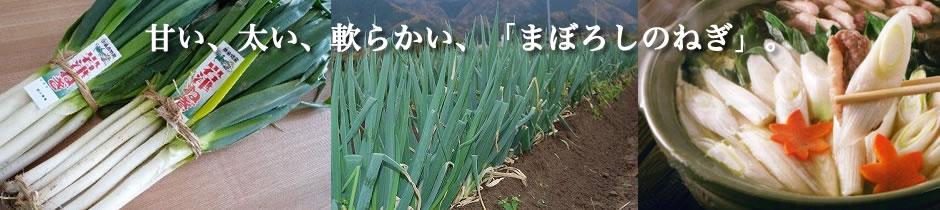 甘い、太い、軟らかい、「まぼろしのねぎ」。兵庫県朝来市の特産